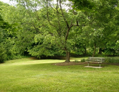 Graves Park 1