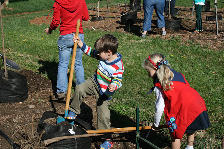 A young boy and girl planting a tree with shovels